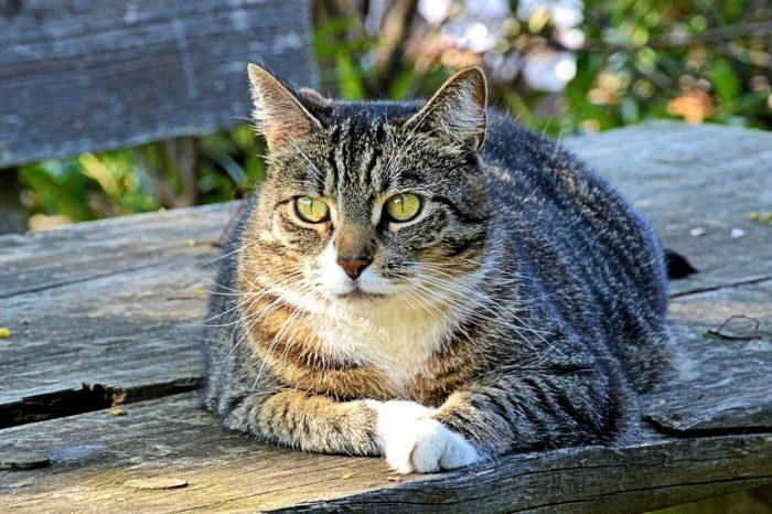 חתול על ספסל
